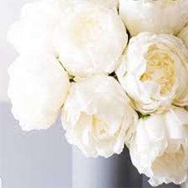 White Peonies (1 stem)